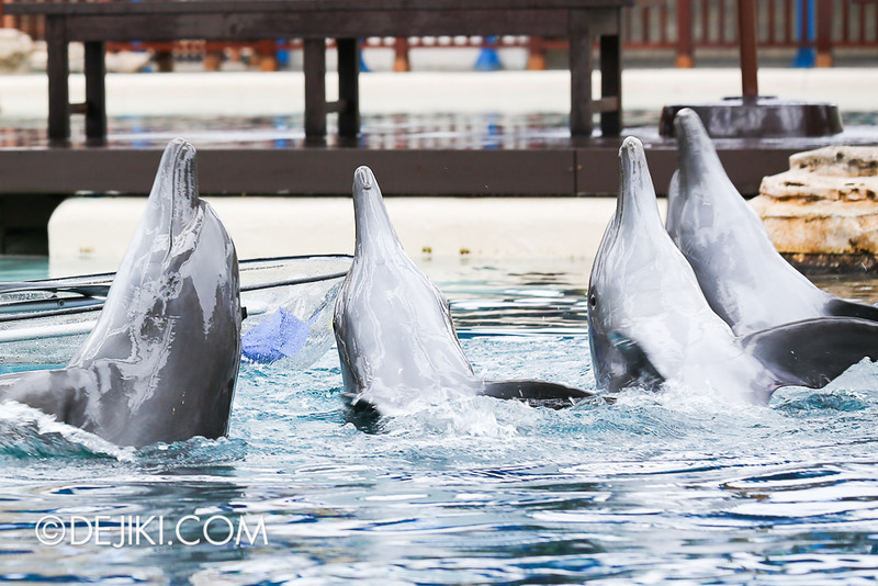 Dolphin Island - Trainer for a Day: Dolphins