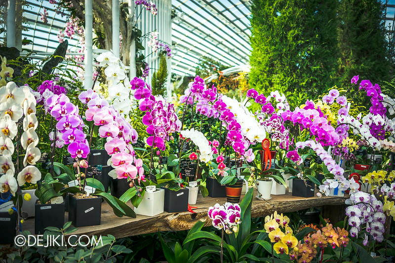 Gardens by the Bay - Orchid Extravaganza - Flower Field 1