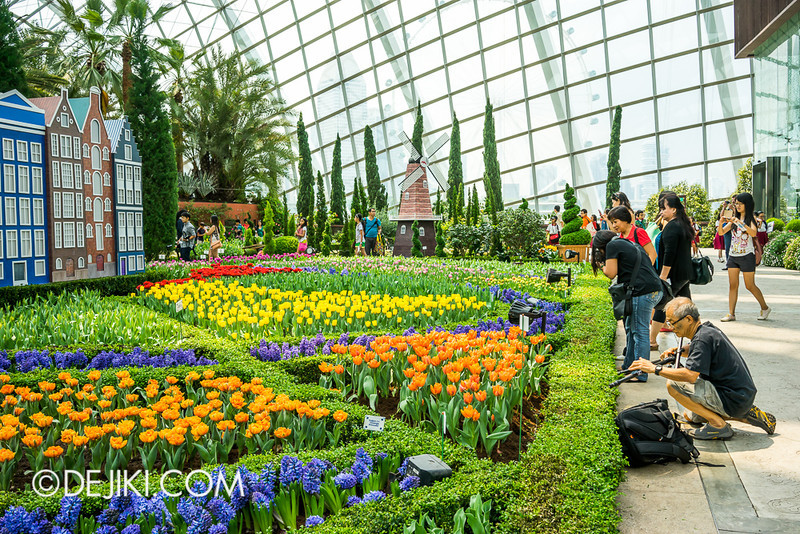 Gardens by the Bay - Tulipmania 2014 - 39