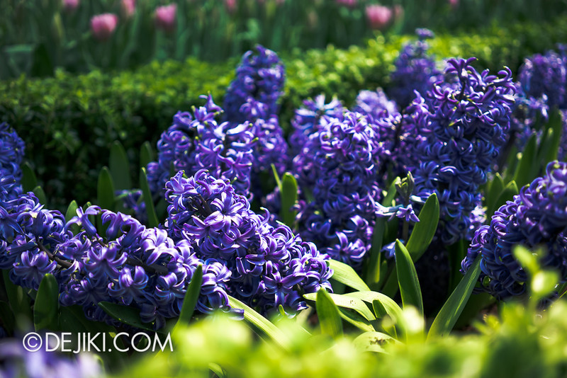 Gardens by the Bay - Tulipmania 2014 - 30