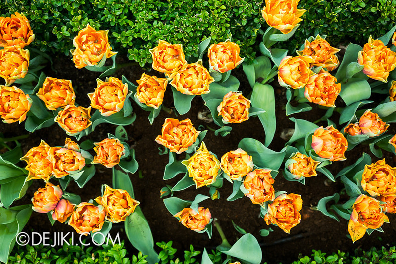 Gardens by the Bay - Tulipmania 2014 - 35