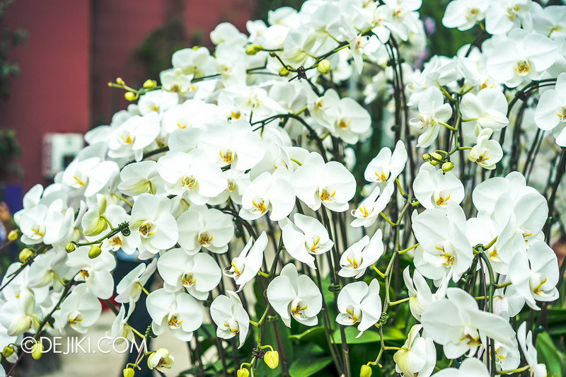 Gardens by the Bay - Orchid Extravaganza - The White Orchids