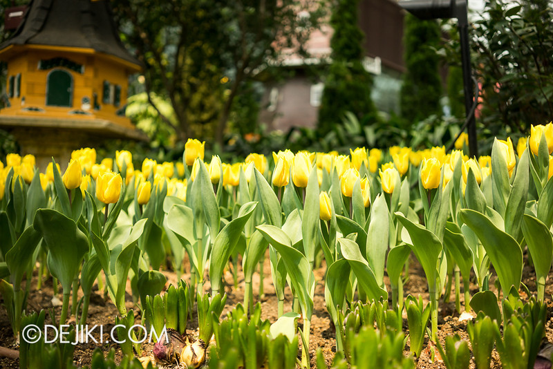 Gardens by the Bay - Tulipmania 2014 - 9
