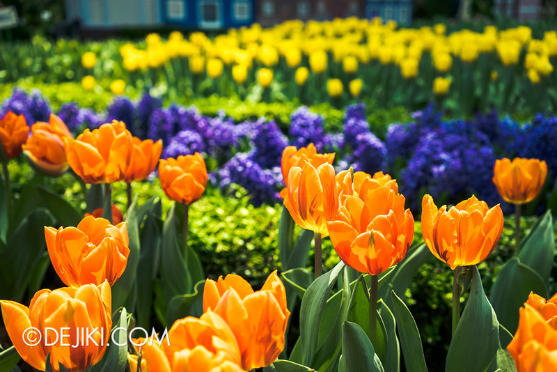 Gardens by the Bay - Tulipmania 2014 - 26