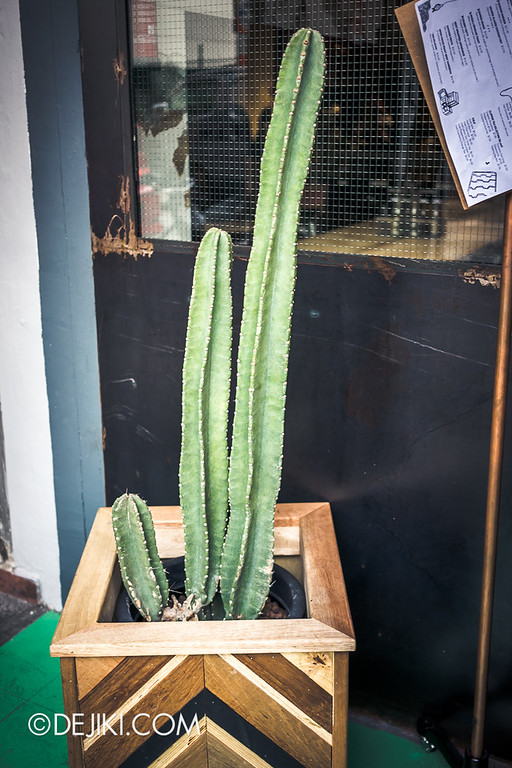 ROUSE on Dunlop - Hipster Cactus