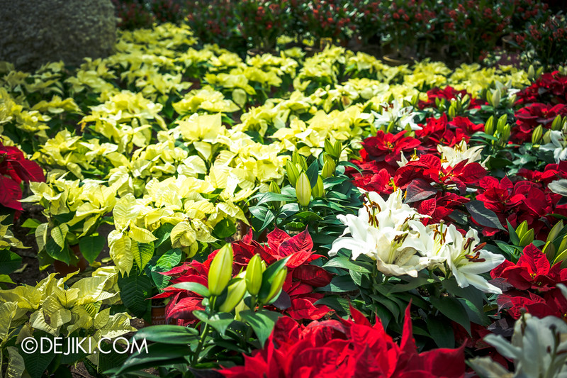 Gardens by the Bay - Yuletide in the Flower Dome - Festive Blooms