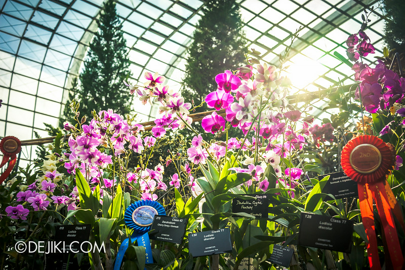 Gardens by the Bay - Orchid Extravaganza - Glow of the Sun