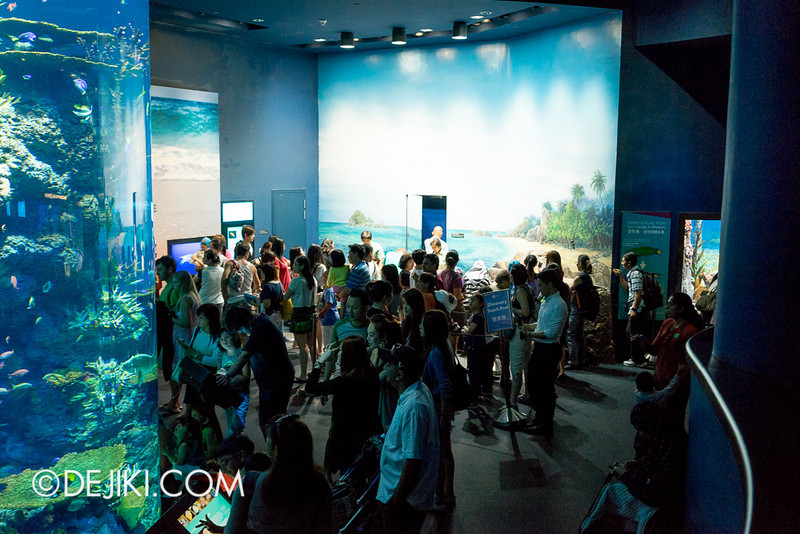SEA Aquarium - Discovery Touch Pool crowd