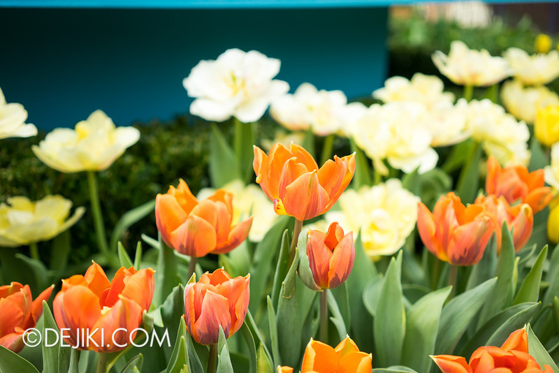 Gardens by the Bay - Tulipmania 2014 - 3