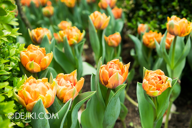 Gardens by the Bay - Tulipmania 2014 - 37