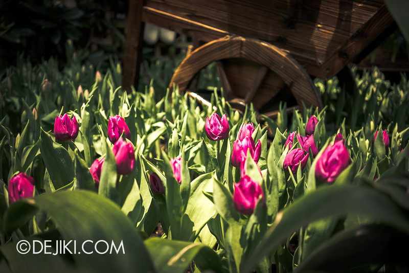 Gardens by the Bay - Tulipmania 2014 - 19