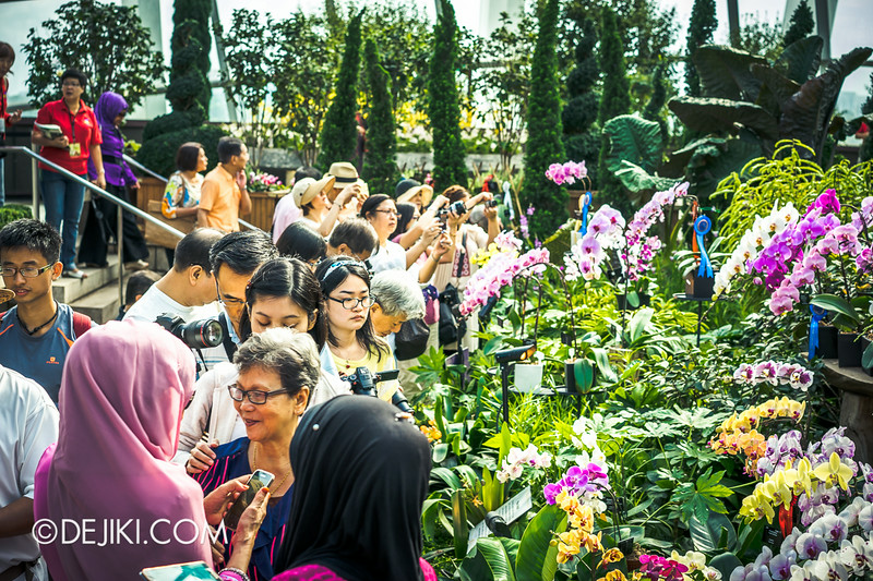 Gardens by the Bay - Orchid Extravaganza - Flower Field 7