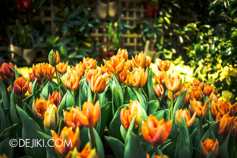 Gardens by the Bay - Tulipmania 2014 - 20