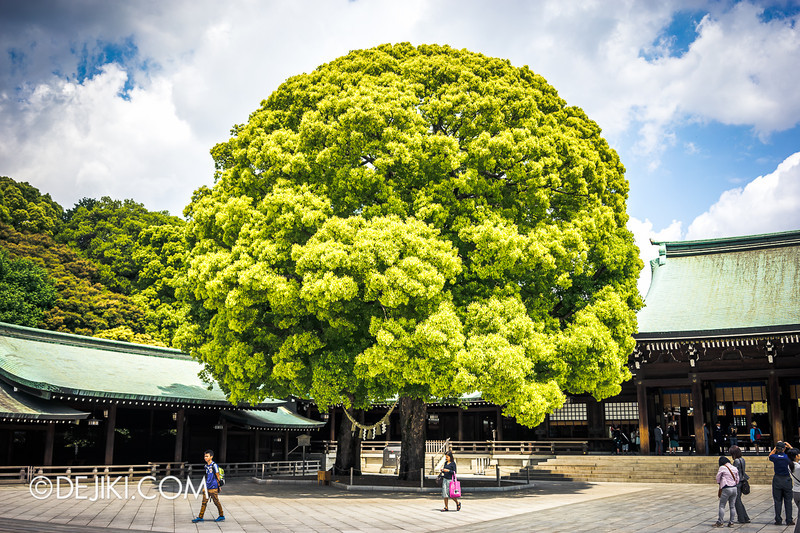 Meiji Shrine 11 - Tree in the Yard