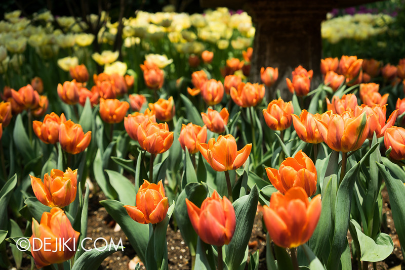 Gardens by the Bay - Tulipmania 2014 - 14