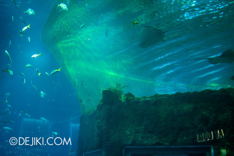SEA Aquarium - Open Ocean and Open Dome netting