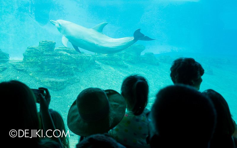SEA Aquarium - Dolphin Island Viewing Area 2