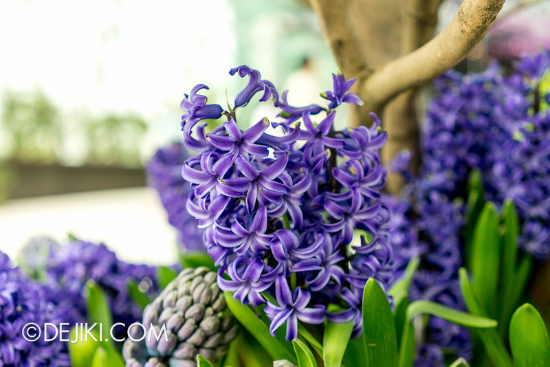 Gardens by the Bay - Tulipmania 2014 - 8