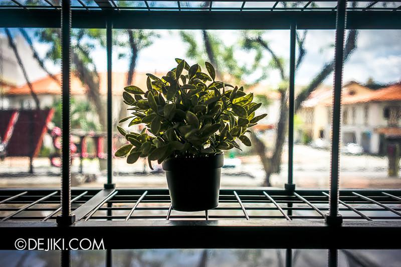 Tiferet Tea Room 7 - Suspended Plant