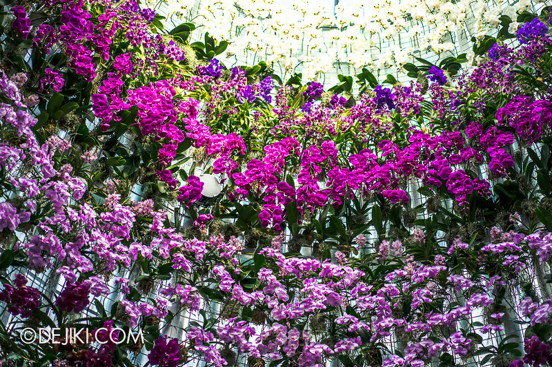 Gardens by the Bay - Orchid Extravaganza - Orchids of the Tower