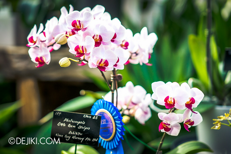 Gardens by the Bay - Orchid Extravaganza - Flower Field 6