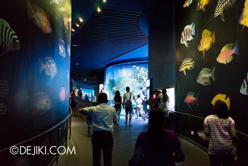SEA Aquarium - walkabout