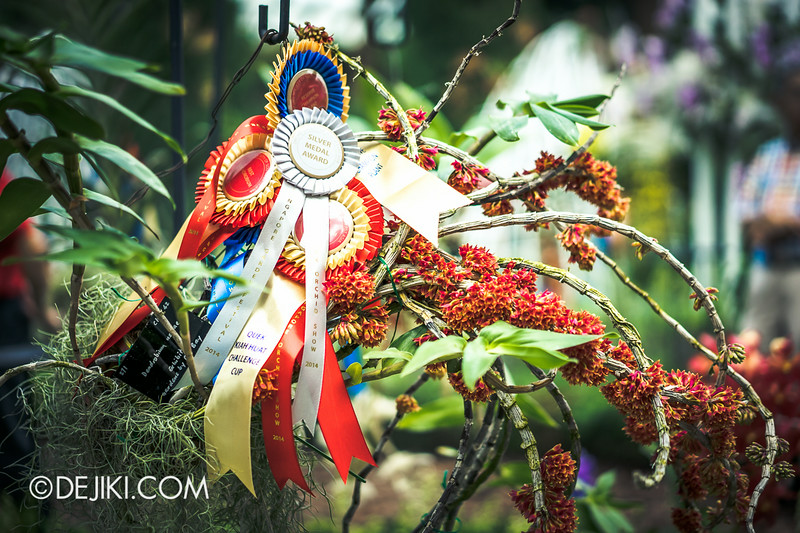 Gardens by the Bay - Orchid Extravaganza - Prize Winning orchids 1