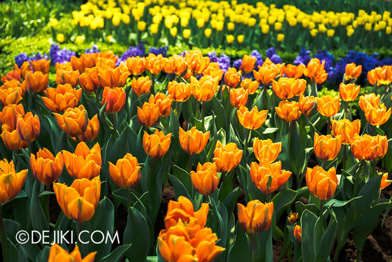 Gardens by the Bay - Tulipmania 2014 - 25