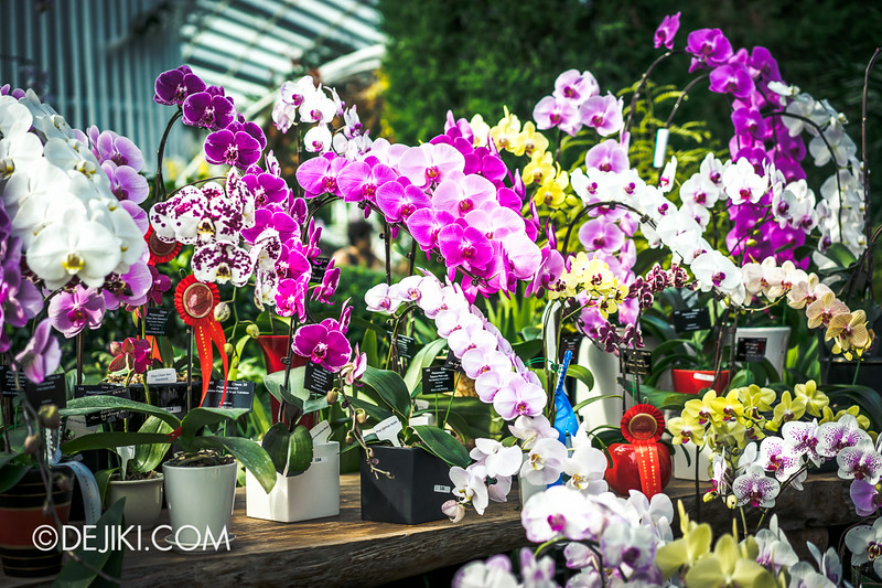 Gardens by the Bay - Orchid Extravaganza - Flower Field 5