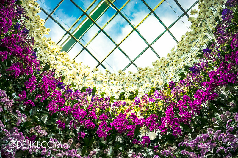 Gardens by the Bay - Orchid Extravaganza - Sky Window