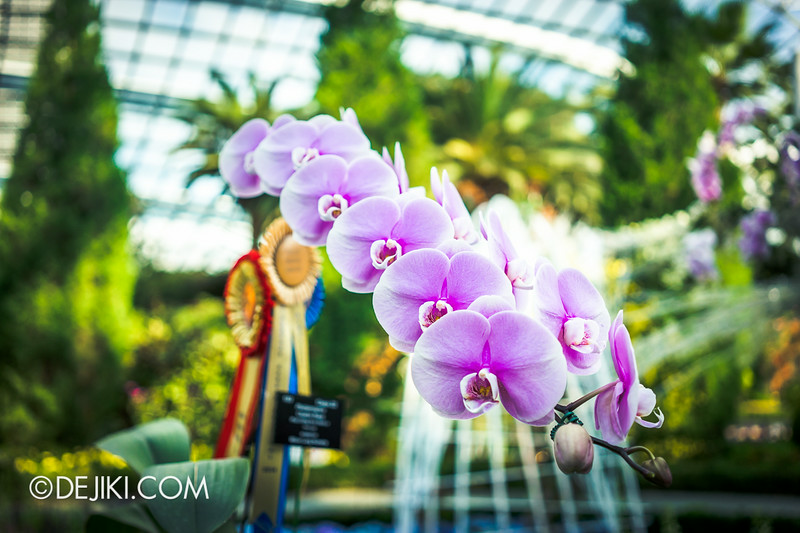 Gardens by the Bay - Orchid Extravaganza - Prize Winning orchids 3