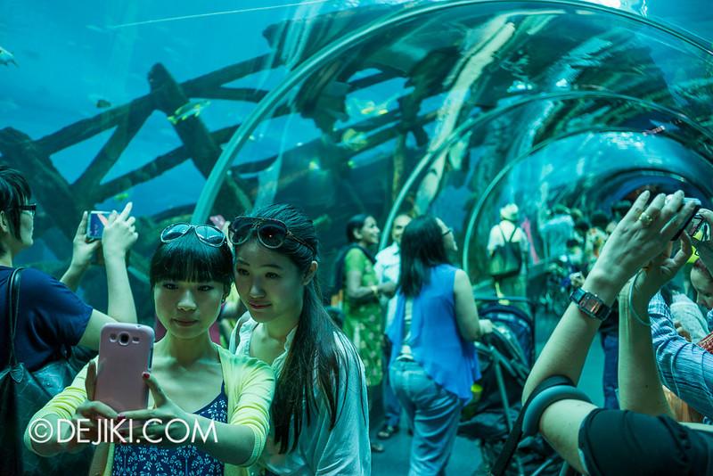 SEA Aquarium - Tube Aquarium