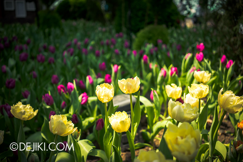 Gardens by the Bay - Tulipmania 2014 - 22
