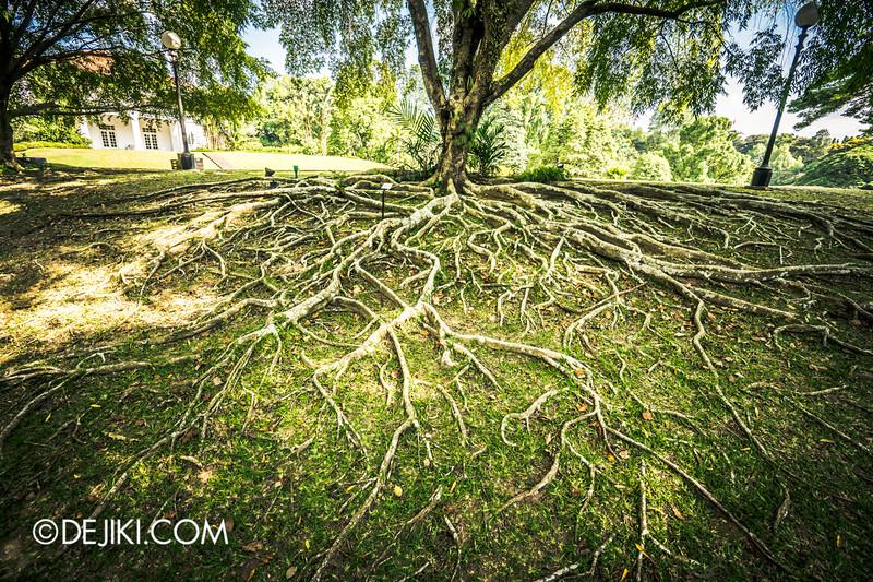The Istana, Singapore - Sri Temasek, Tree Roots