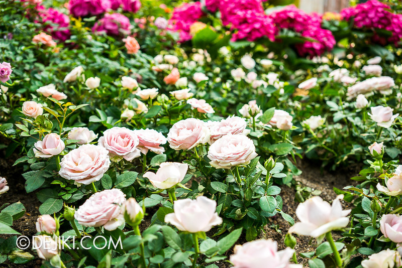 Gardens by the Bay - War of the Roses / Roses 7