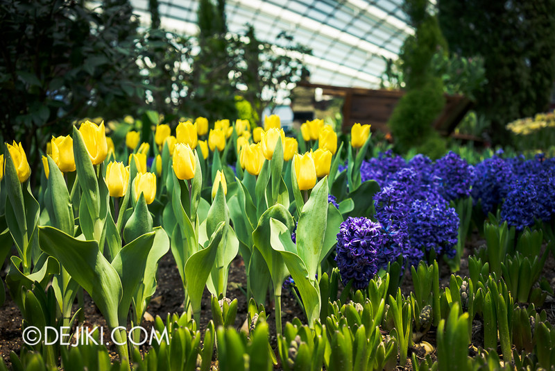 Gardens by the Bay - Tulipmania 2014 - 11