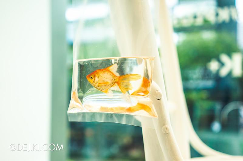 K+ gallery - keng lye: Alive without breath / Takeaway Fish, closeup